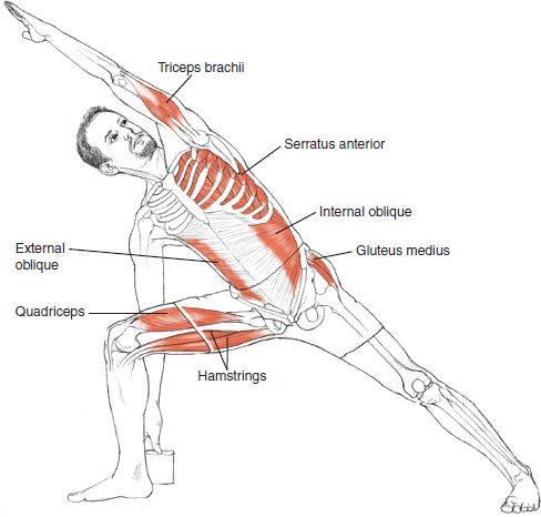 Anatomy of Asana - The Yoga Space
